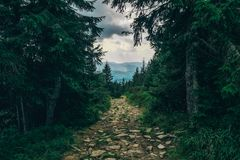 Shady road through the hills royalty free stock image