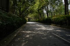 Shady road in plants and trees at sunny spring noon. Shaded road in plants and trees at sunny spring noon,Chengdu,China Stock Photo