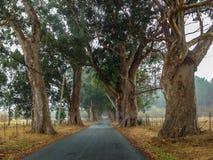 Shady Road. Shaded Avenue leading to the beach,Pescadero,California Stock Photography