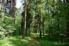 Shady road through the summer coniferous and deciduous forest young fresh grass. Beautiful nature in spring and summer outside the city stock images