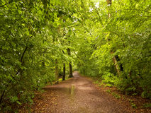 Shady summer forest hiking trail after rain Stock Photo