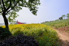 Shady tree on flowering hillside at sunny summer noon Stock Photography