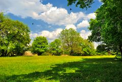 Shady trees on green meadow. Under blue cloudy sky Stock Images