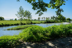 Shady verdant riverbank in sunny summer Stock Image