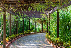 A Shady Walkway. A covered walkway filled with vines and tropical plants makes an inviting place to stroll Royalty Free Stock Images