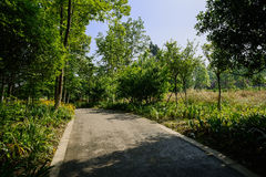 Shady way on slope in sunny summer morning Royalty Free Stock Images