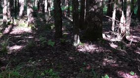 Shady wet forest tilt up stock video footage