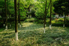 Shady woods behind Chinese traditional dwelling building in sunn Stock Photography