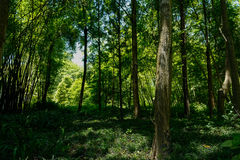 Shady woods in sunny summer Royalty Free Stock Photos