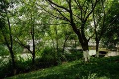 Shady and woody riverside near highway bridge in sunny summer Stock Photo