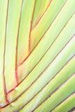 Shaft banana background Stock Photography
