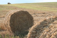 Shaft of straw Royalty Free Stock Photos