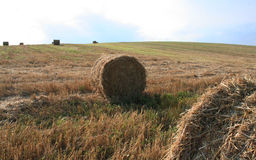 Shaft of straw Royalty Free Stock Photography