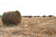 Shaft of straw Stock Photo
