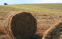 Shaft of straw Royalty Free Stock Image