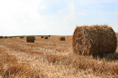 Shaft of straw Royalty Free Stock Photo