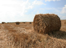 Shaft of straw Stock Photos