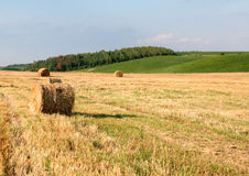 Shaft of straw Stock Images