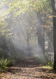 Shafts of Light on Foggy Trail. In fall Royalty Free Stock Images