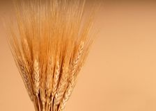Shafts of wheat. Against tan background Royalty Free Stock Photos