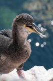 Shag Chick Stock Images