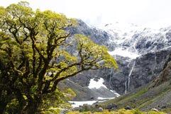 Shaggy дерево Стоковые Фото