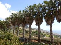 Shaggy пальмы Стоковое Изображение RF