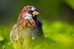 Shaggy птица стоковое изображение