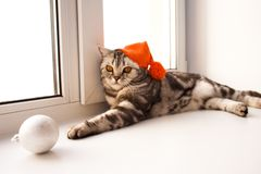 Shaggy brown cat. Big shaggy brown cat lies on the white windowsill and looks down stock photography