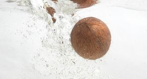 Shaggy coconut in fresh water. Royalty Free Stock Image