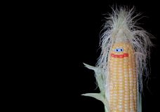 Shaggy corn Royalty Free Stock Photo