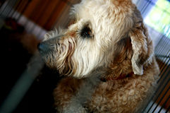 Shaggy Dog. A cute shaggy dog in a kennel waiting to be adopted stock photography