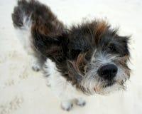 Shaggy dog. A shaggy stray dog on the beach Royalty Free Stock Photo