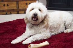 Shaggy Dog with Bone Stock Photos