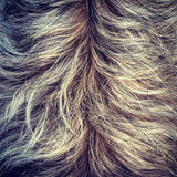 Shaggy Dog Fur Texture. Closeup of a shaggy dog's back, showing texture of the fur Stock Image