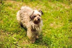 Shaggy dog on the grass Stock Photography