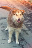 Shaggy dog outdoors Stock Image