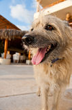 Shaggy dog outside Stock Image