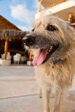 Shaggy dog outside Stock Image