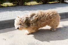 Shaggy dog. Shaggy dog in the park. Winter season stock photo