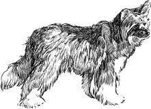 Shaggy dog Stock Image
