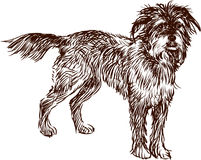 Shaggy dog Stock Photo