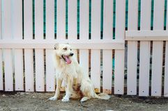 A shaggy puppy is waiting for his master. A shaggy fair puppy is waiting for his master royalty free stock photo