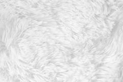 Shaggy fur texture Royalty Free Stock Photo