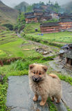 Shaggy ginger puppy sitting on stone in Chinese countryside. Royalty Free Stock Photo