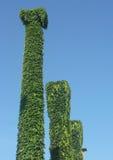 Shaggy grüner Pol. Stockbild