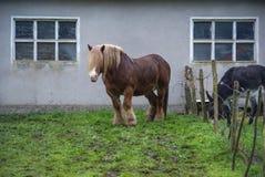 Shaggy horse and gray donkey on  green meadow near  house Royalty Free Stock Photo