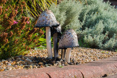 Shaggy Ink Caps Mushrooms Royalty Free Stock Photography