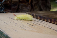 Shaggy larva. Royalty Free Stock Photography