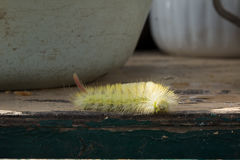 Shaggy larva. Royalty Free Stock Images